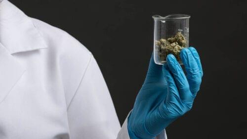 marihuana test
