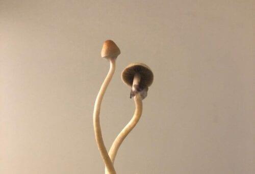 hongos mágicos