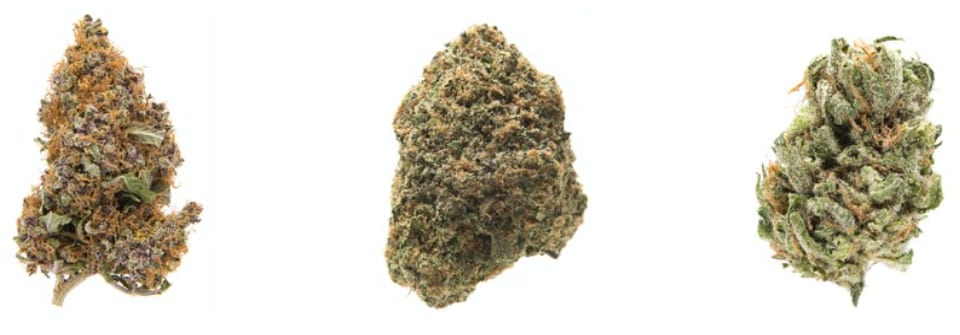 cepas marihuana purple haze