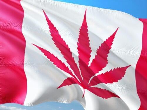 acciones cannabis canadá