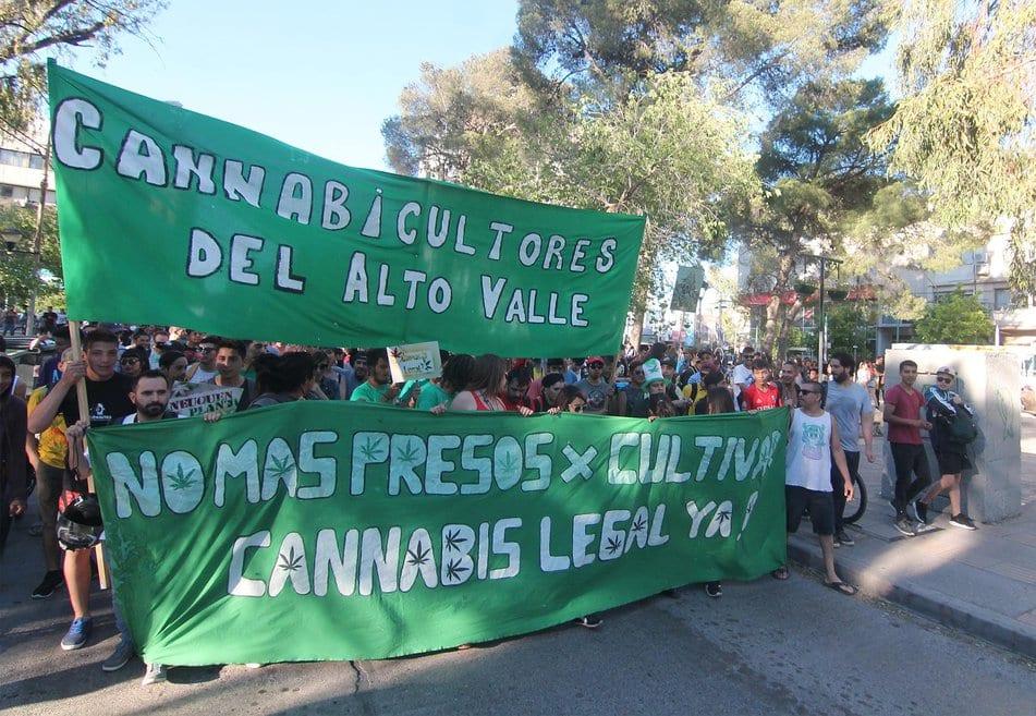 cannabis neuquén