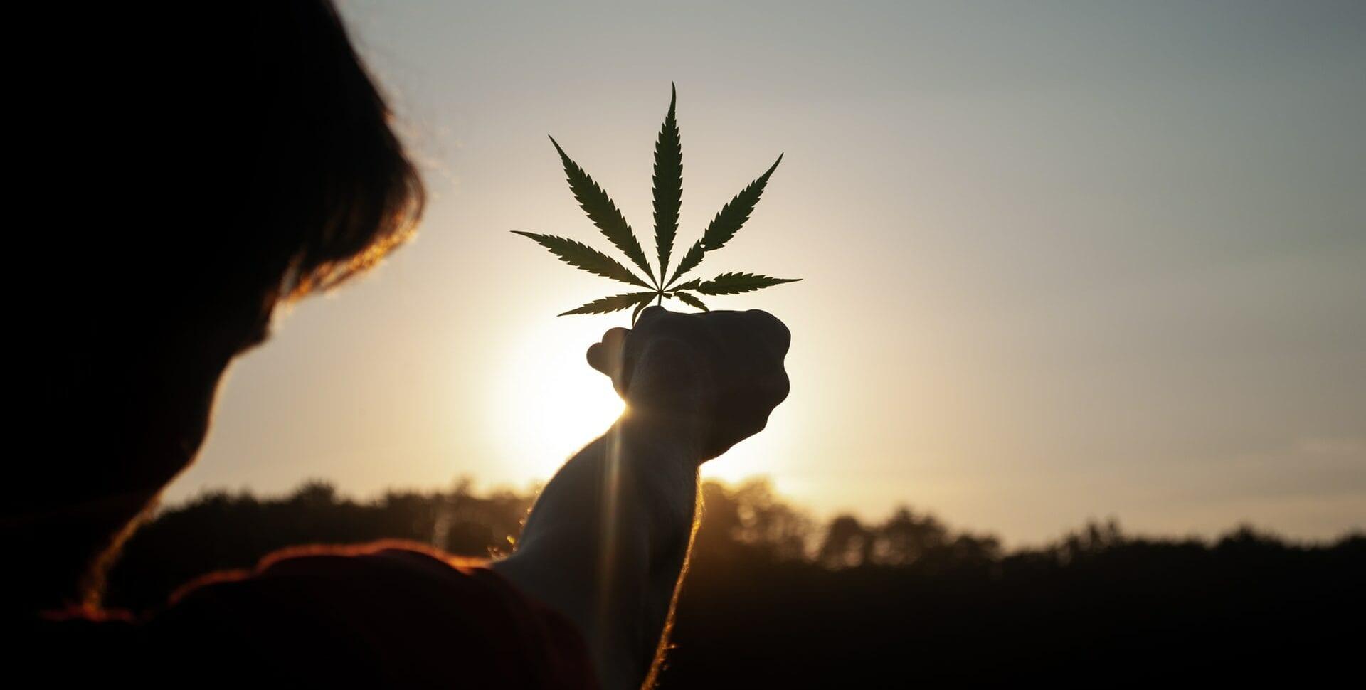 asociaciones latinoamericanas cannabis