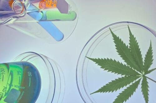 cannabis análisis