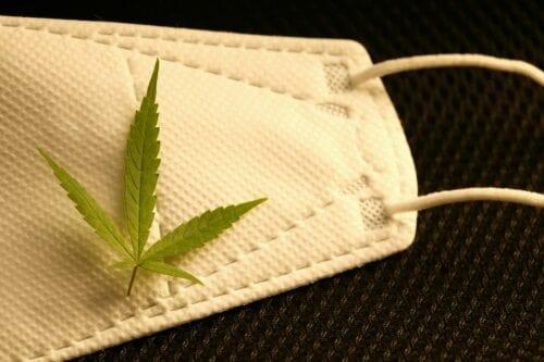 vacuna covid marihuana cannabisA