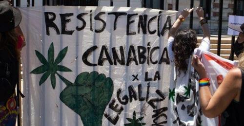 cultivo cannabis buenos aires