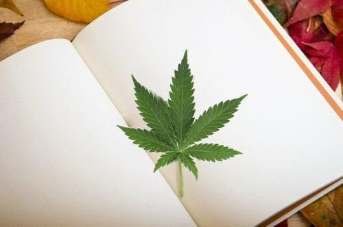 estudiar cannabis