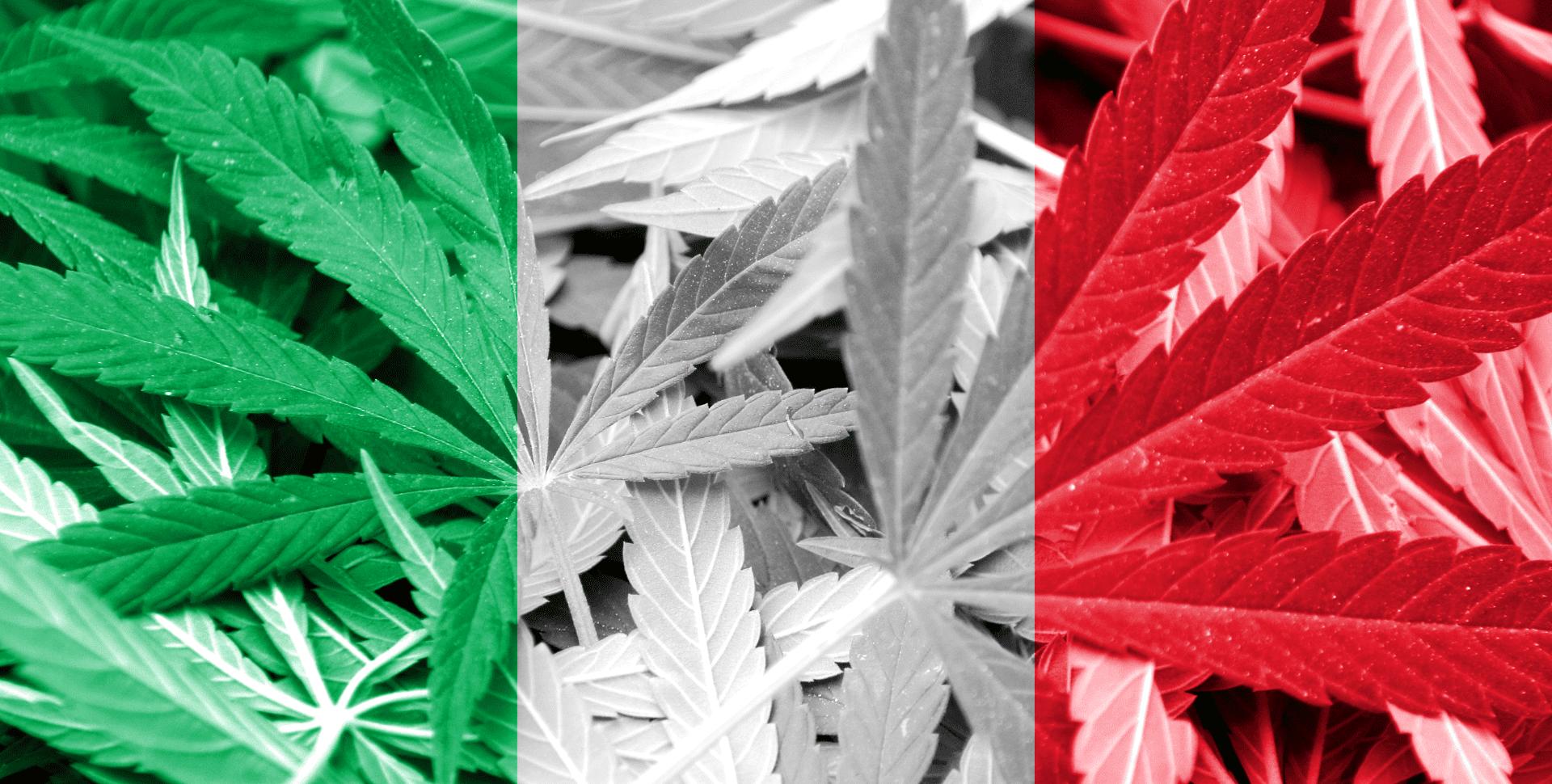 cannabis senado méxico