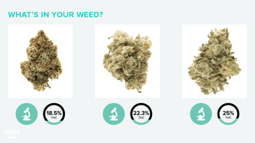 nombres cepas cannabis