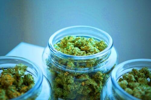 registro cannabis medicinal