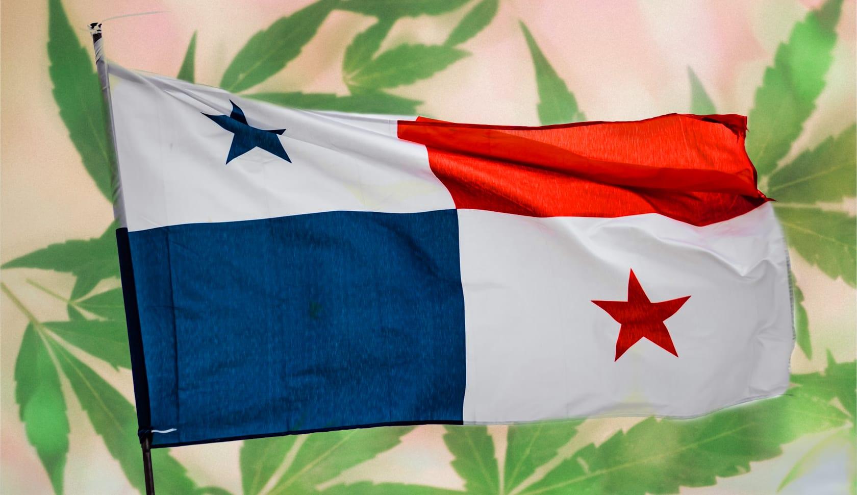 cannabis panamá