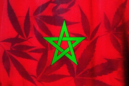 cannabis medicinal marruecos