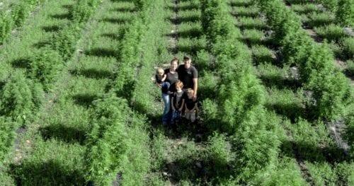 Nightshade Farm