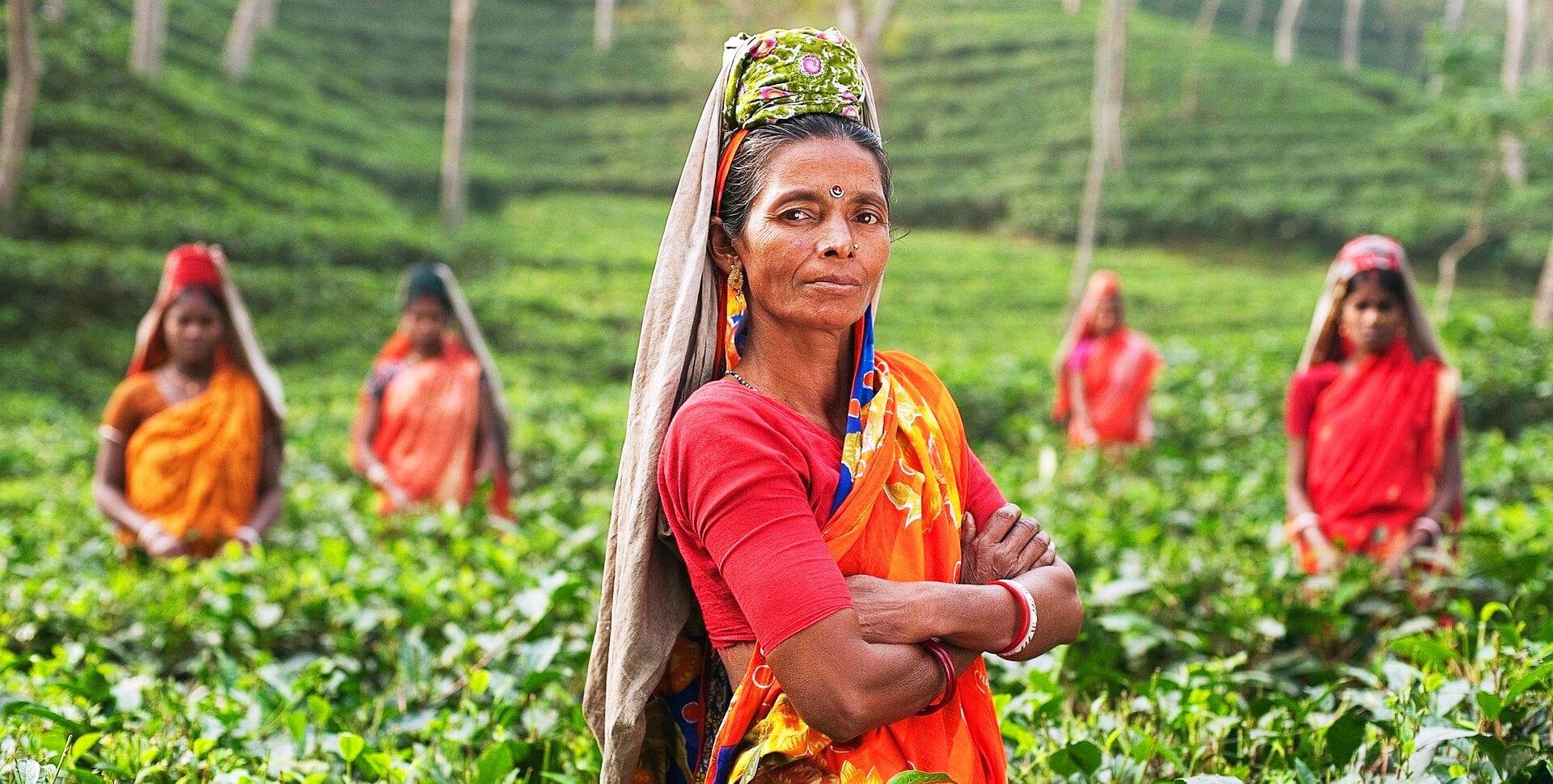 cannabis india