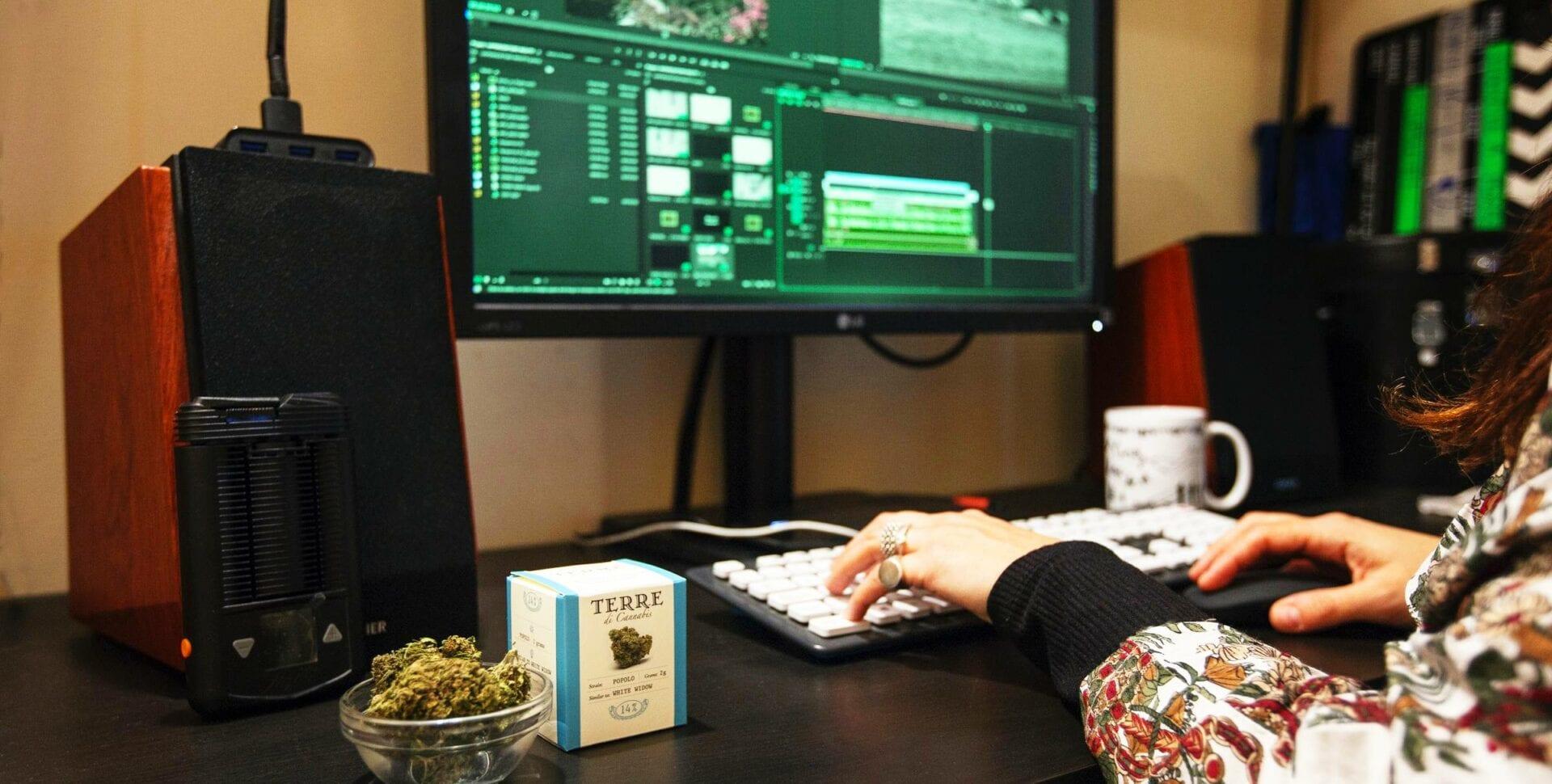 trabajo marihuana