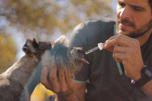 cannvet mascotas animales marihuana