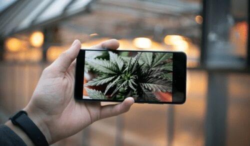 instagram cannabis