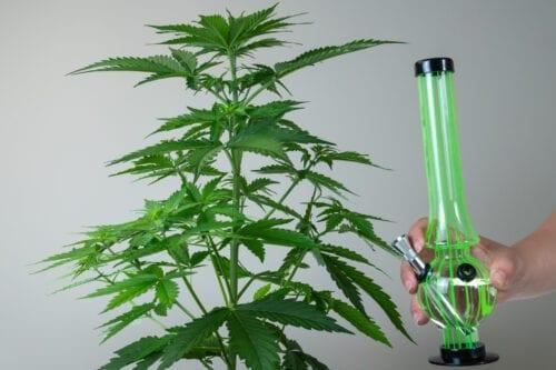 bong cannabis marihuana