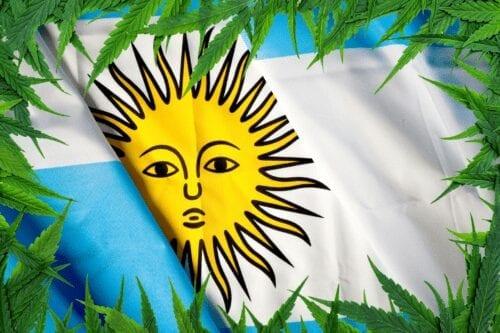 cannabis argentina senado debate