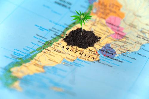 cannabis cáñamo argentina
