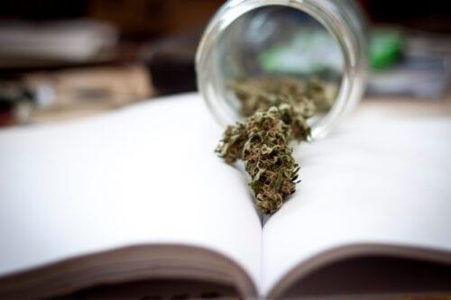 quilmes cannabis