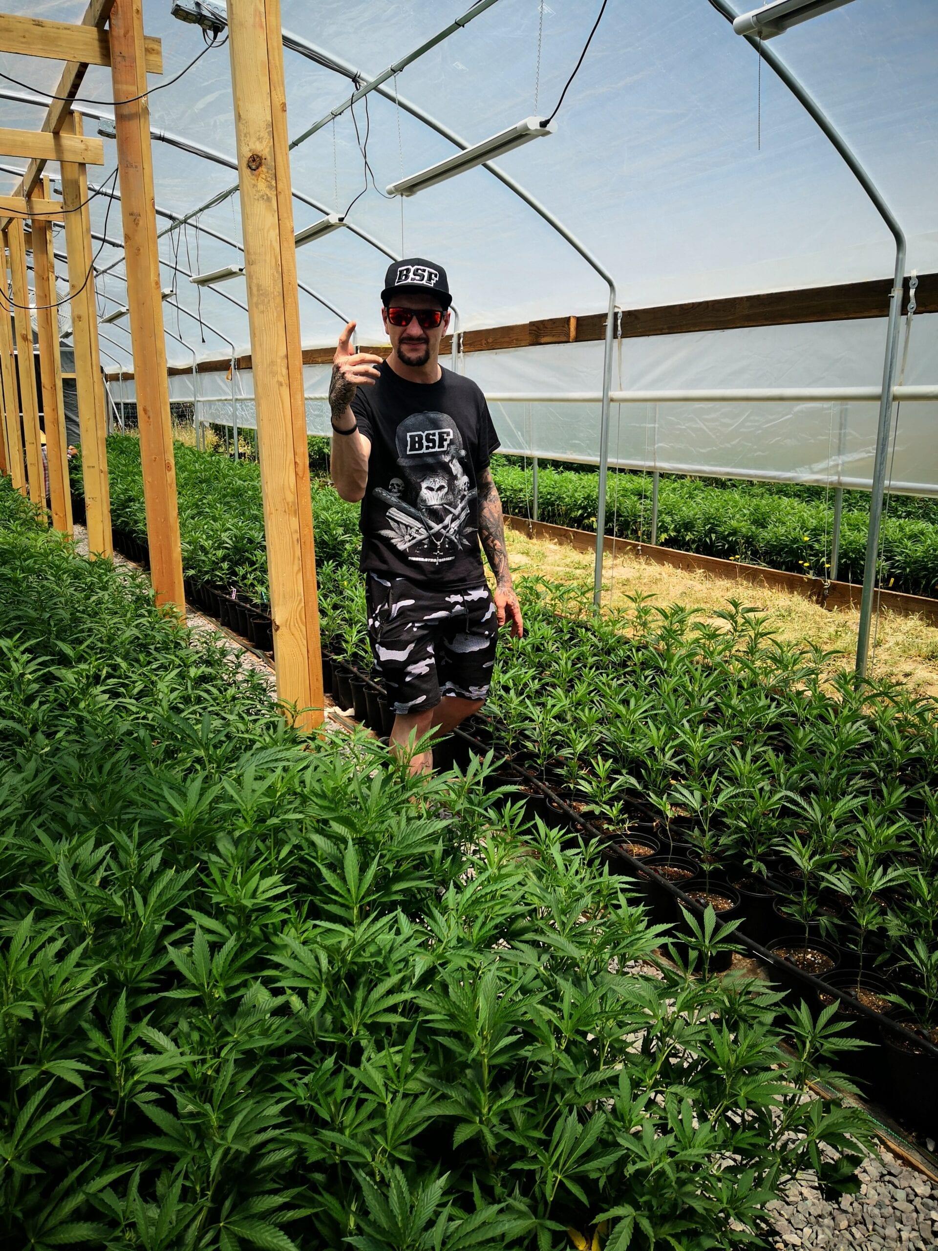 BSF Seeds