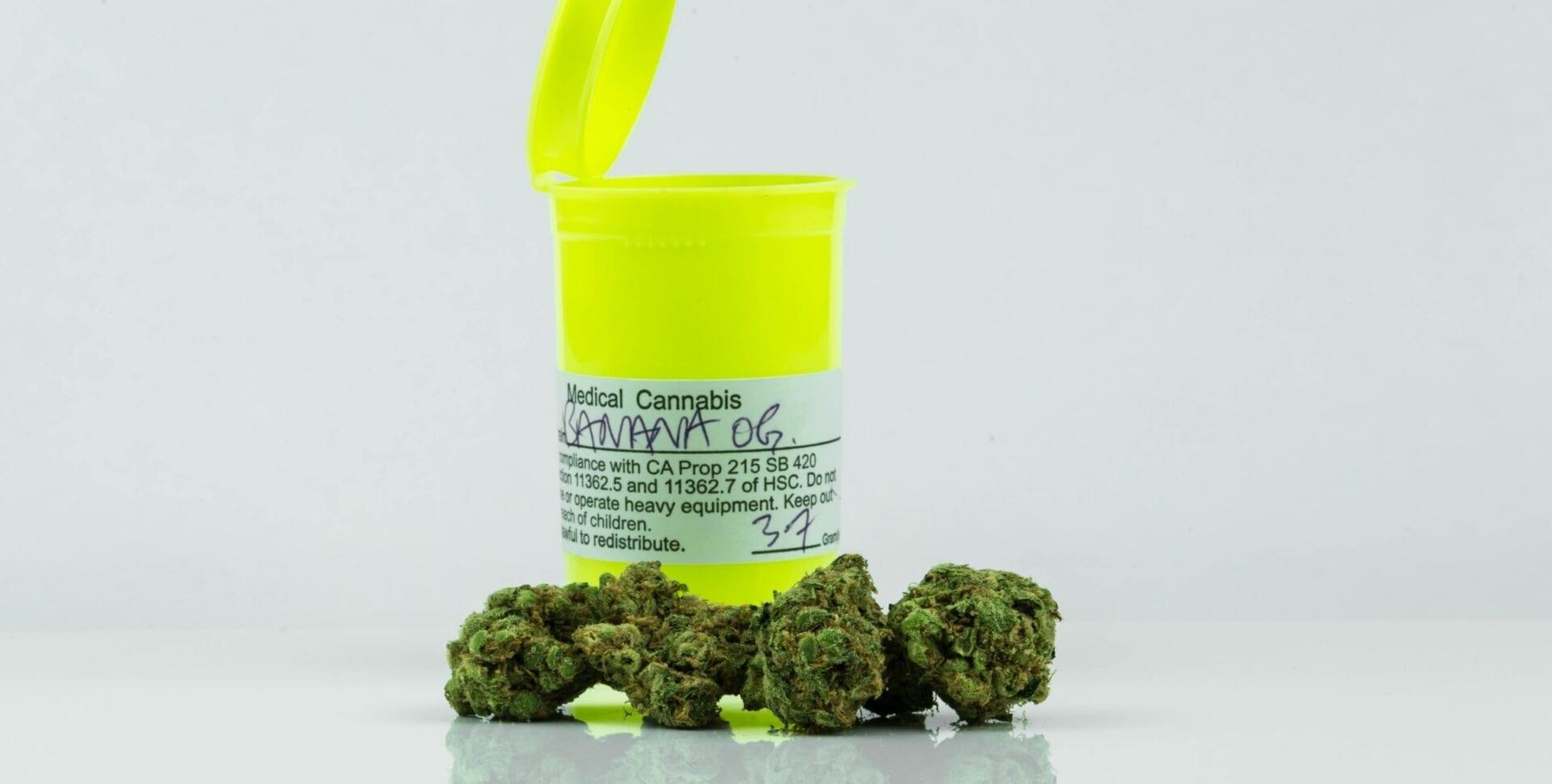 pacientes cannabis project twenty 21
