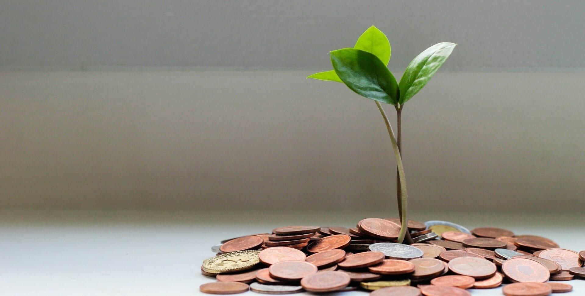 invertir cannabis post seed