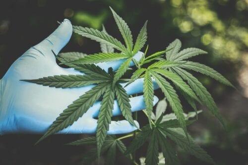 cannabis medicinal corrientes