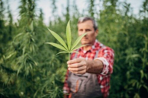 cannabis san juan