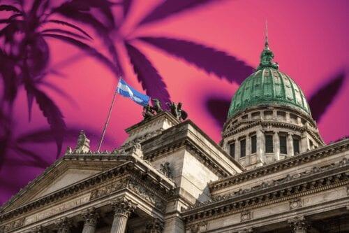 senado cannabis