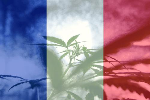 francia cáñamo cannabis marihuana