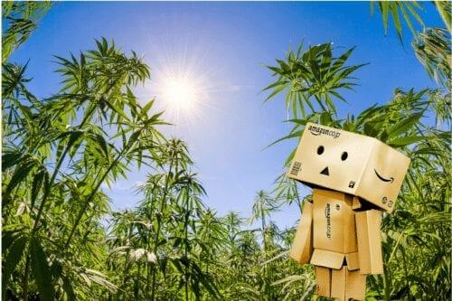 amazon marihuana