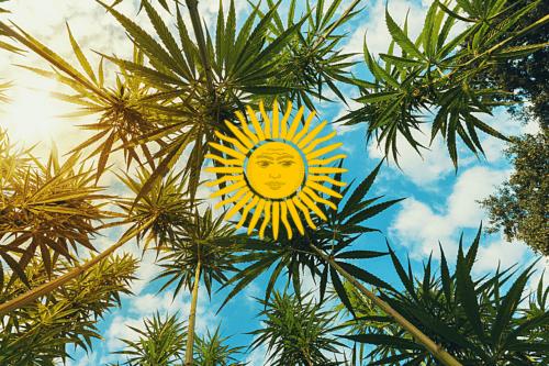 proyecto ley marihuana cannabis argentina