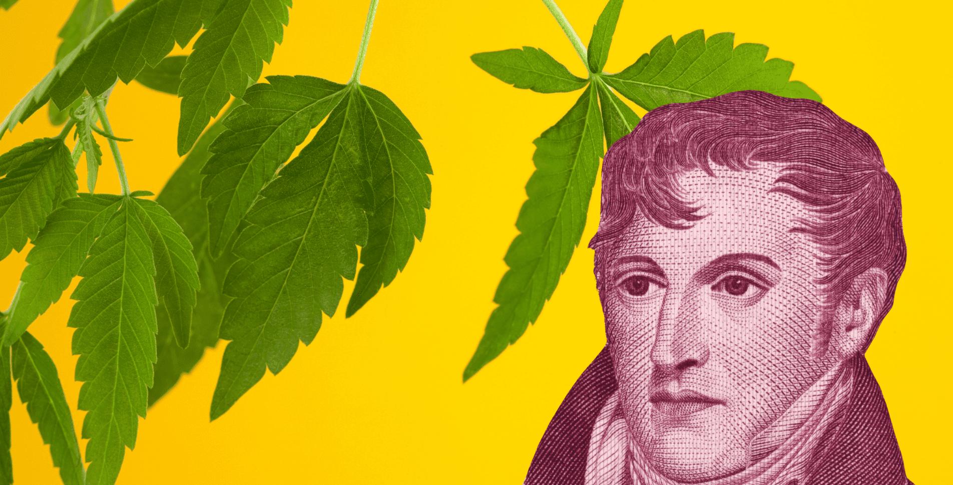 regulación argentina cáñamo cannabis