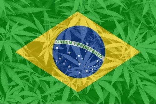 marihuana brasil