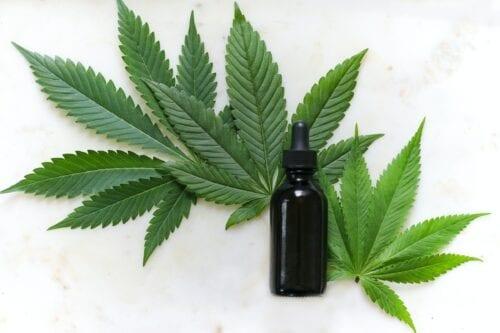 tucumán cannabis medicinal