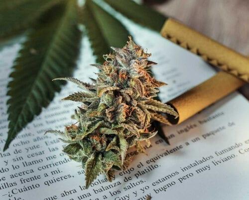 escritores marihuana