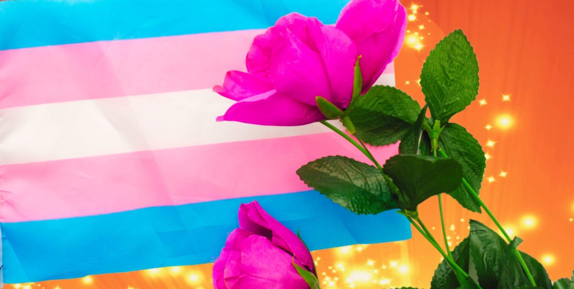ley empleo trans