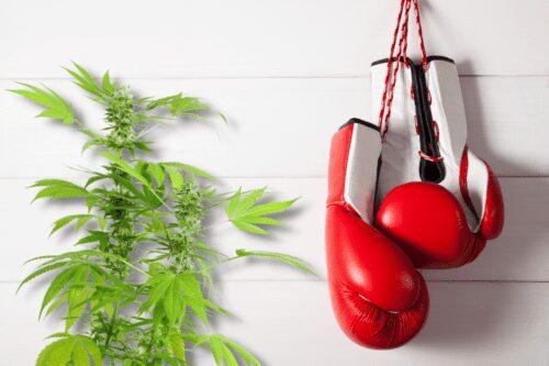 boxeadores marihuana