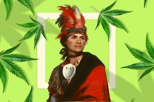 tribus cannabis