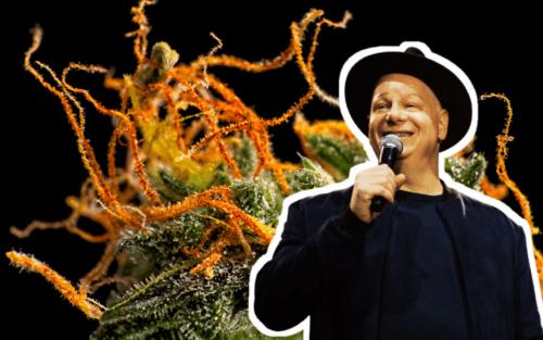 jeff ross roast pot marihuana cannabis