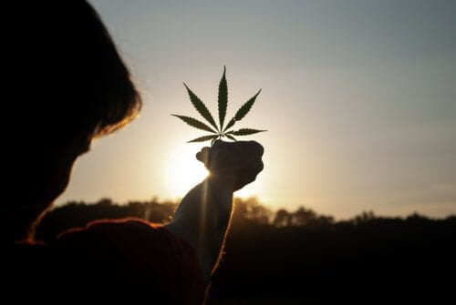 cannabis medicinal senado