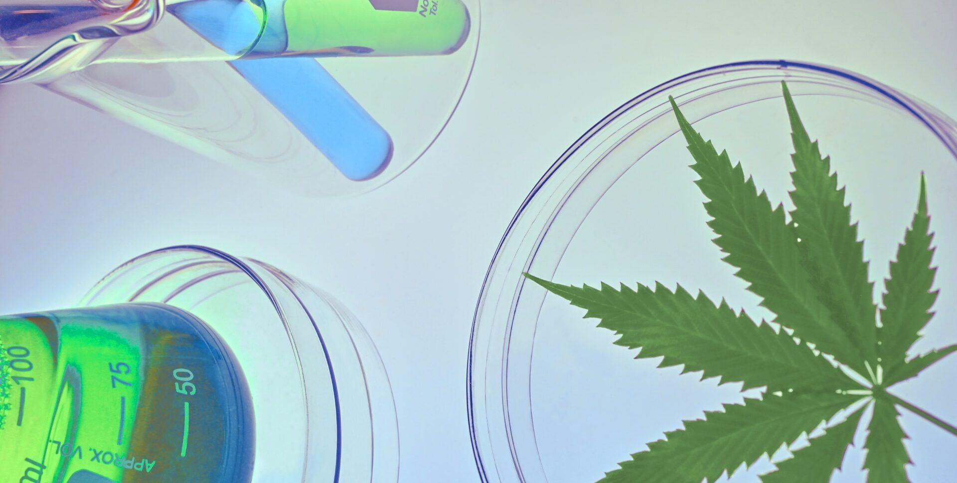 cannabis china