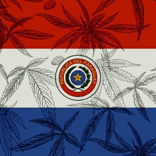 paraguay cáñamo