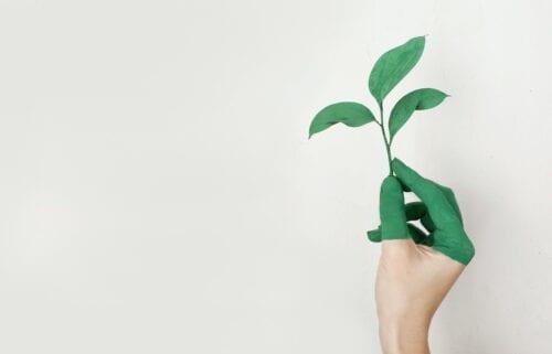 sostenibilidad cannabis