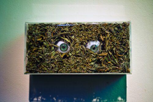 arte marihuana muestra el monstruo que no dejan salir