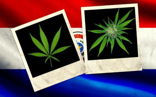 paraguay cannabis exportación