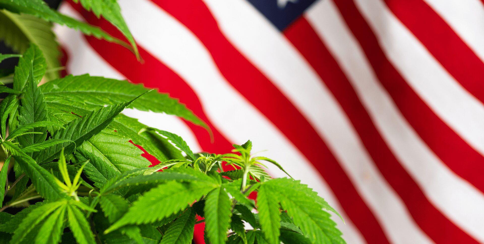 eeuu estadounidenses marihuana detenciones industria cannabis 2021 cáñamo