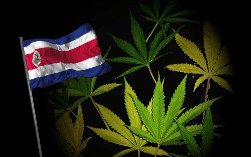 costa rica cannabis medicinal autocultivo cáñamo