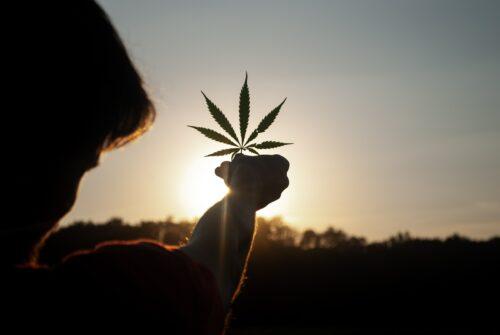 despenalización marihuana presidente
